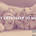 Why do cats sleep so much featured image