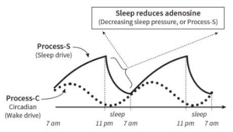 Sleep processes throughout the day diagram