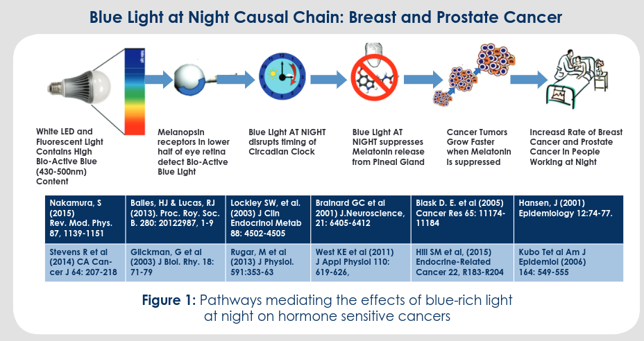 Blue light at night cancer diagram