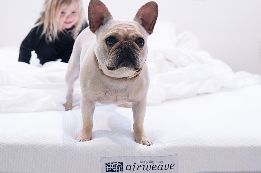Dog standing on an airweave pillow