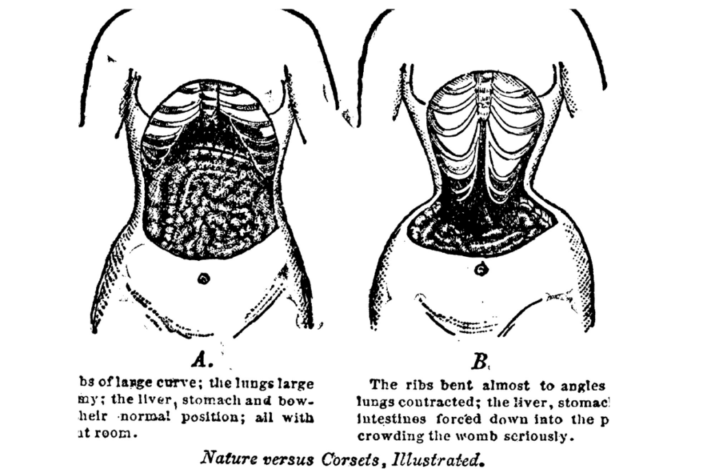 the anatomy of the corseted waist